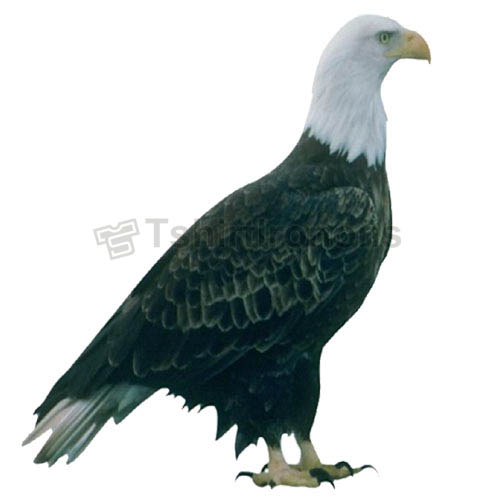 Eagle T-shirts Iron On Transfers N5488