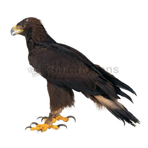 Eagle T-shirts Iron On Transfers N5492