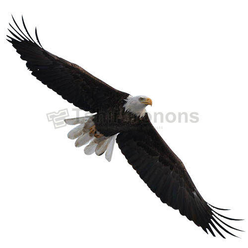 Eagle T-shirts Iron On Transfers N5503