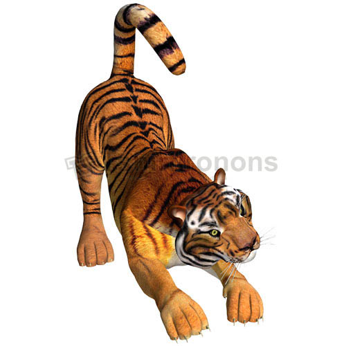 Tiger T-shirts Iron On Transfers N5620